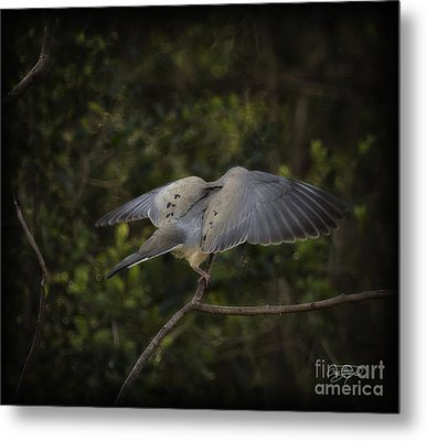 Peace Metal Print by Cris Hayes