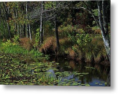 Peaceful Pond Metal Print by Karol Livote