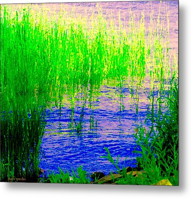 Peaceful Stream  Quebec Landscape Art Tall Grasses At The Lakeshore Waterscene Carole Spandau Metal Print by Carole Spandau