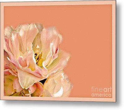 Peach Rose Metal Print by Carol F Austin