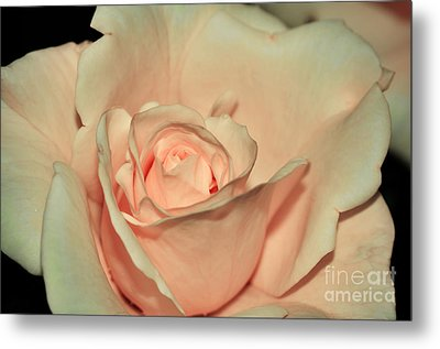 Peaches And Cream Metal Print by Kaye Menner