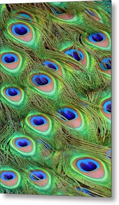 Peacock Feather Cascade Metal Print by Angelina Vick