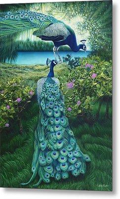 Peacock Garden Metal Print by Larry Taugher