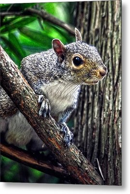 Peanut? Treat? Metal Print by Sandi OReilly
