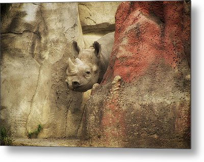 Peek A Boo Rhino Metal Print by Thomas Woolworth