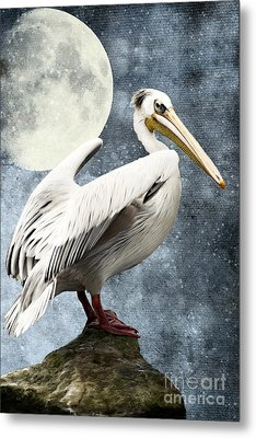 Pelican Night Metal Print by Angela Doelling AD DESIGN Photo and PhotoArt