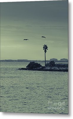 Pelicants And Palm Metal Print by Marvin Spates