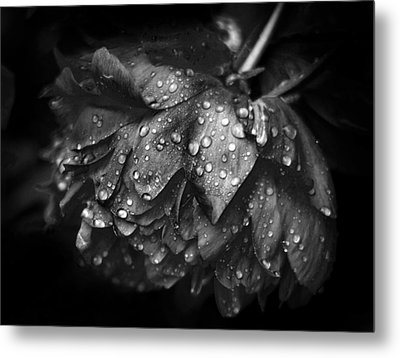 Refreshed Metal Print by Jessica Jenney