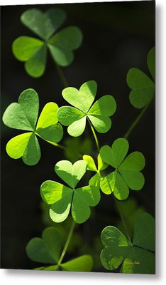 Perfect Green Shamrock Clovers Metal Print by Christina Rollo