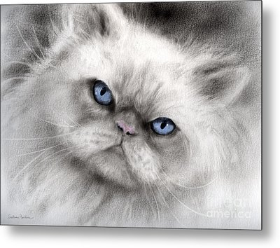 Persian Cat With Blue Eyes Metal Print by Svetlana Novikova