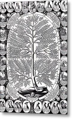 Peruvian Bark Or Jesuit Tree Metal Print by Unknown
