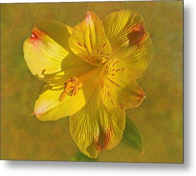 Peruvian Lily Metal Print by Sandi OReilly