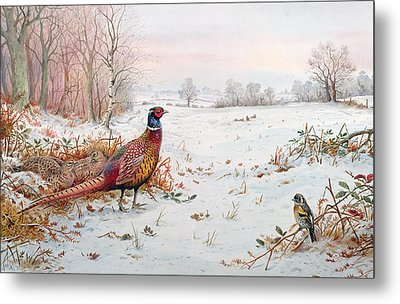 Pheasant And Bramblefinch In The Snow Metal Print by Carl Donner