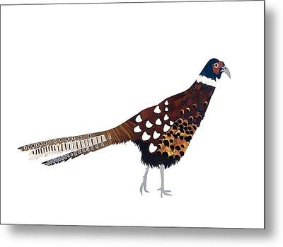 Pheasant Metal Print by Isobel Barber