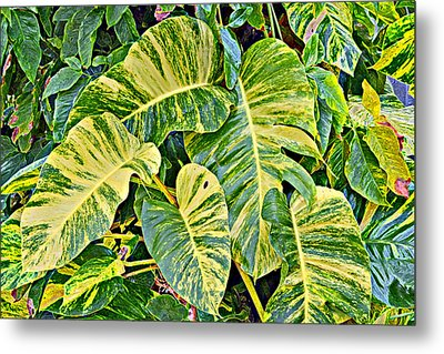 Philodendron 2 Metal Print by Scott Parker