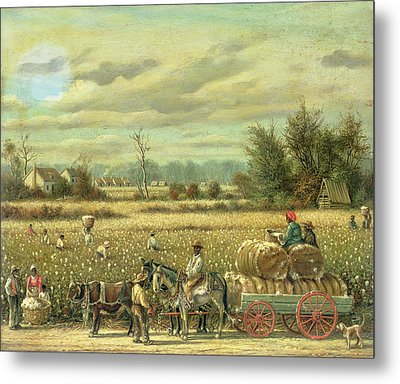 Picking Cotton Metal Print by William Aiken Walker
