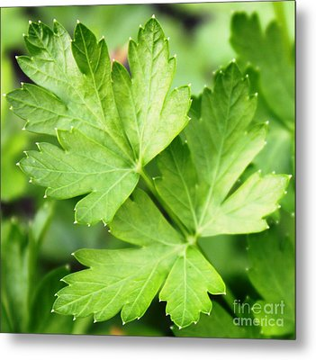 Picture Perfect Parsley Metal Print by French Toast