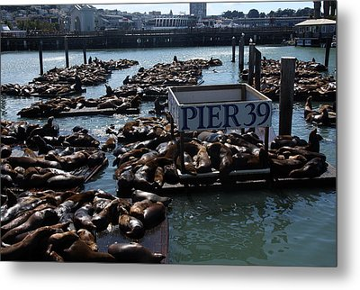 Pier 39 San Francisco Bay Metal Print by Aidan Moran