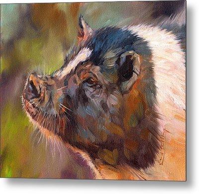 Pig Metal Print by David Stribbling