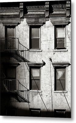 Pigeon Metal Print by Dave Bowman