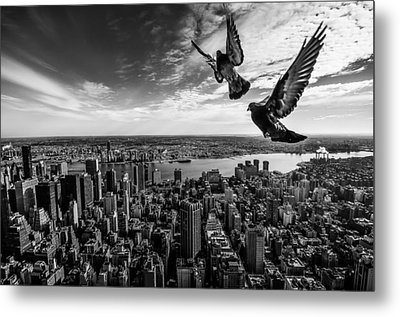 Pigeons On The Empire State Building Metal Print by Sergiosousa