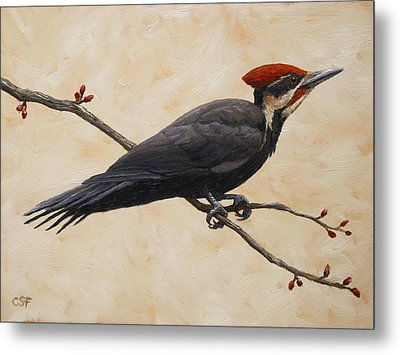 Pileated Woodpecker Metal Print by Crista Forest