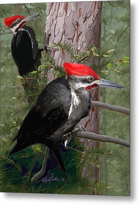 Pileated Woodpeckers Metal Print by Pam Little
