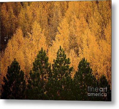 Pine Trees Metal Print by Tim Hester