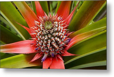 Pineapple Plant Metal Print by Aged Pixel