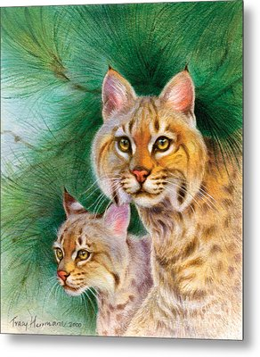 Pinewoods Bobcat Metal Print by Tracy Herrmann
