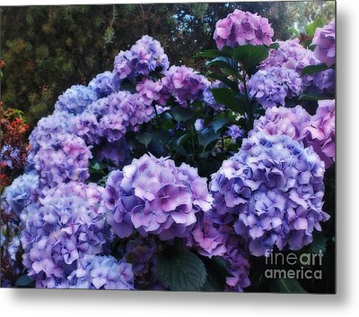 Pink And Mauve Hydrangeas Metal Print by Kaye Menner