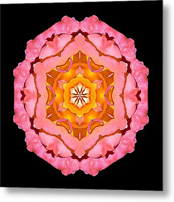 Pink And Orange Rose I Flower Mandala Metal Print by David J Bookbinder