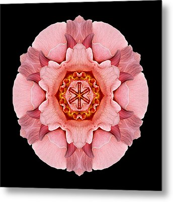 Pink And Orange Rose Iv Flower Mandala Metal Print by David J Bookbinder