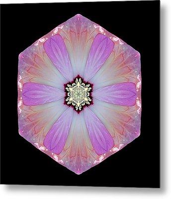 Pink And White Hibiscus Moscheutos I Flower Mandala Metal Print by David J Bookbinder