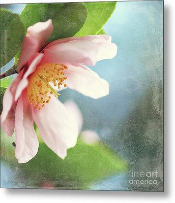 Pink Camellia Metal Print by Sylvia Cook