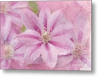 Pink Clematis Profusion Metal Print by Betty LaRue