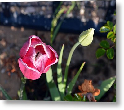 Pink Flower And Bud Metal Print by Brent Dolliver