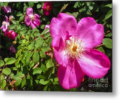 Pink Flower Metal Print by Gregory Dyer