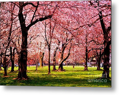 Pink Forest Metal Print by Patti Whitten