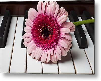 Pink Mum On Piano Keys Metal Print by Garry Gay