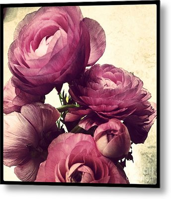 Pink  Ranunculus Metal Print by Heather L Wright