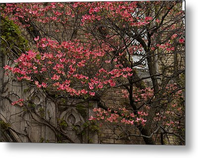 Pink Spring - Dogwood Filigree And Lace Metal Print by Georgia Mizuleva