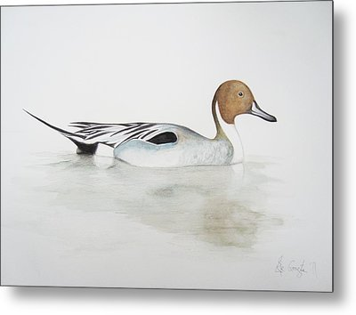 Pintail Duck Metal Print by Ele Grafton