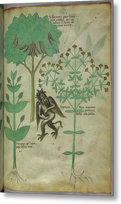 Plant And A Demon Metal Print by British Library