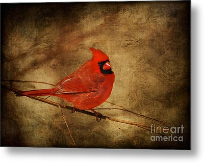 Please Feed The Birds Metal Print by Lois Bryan