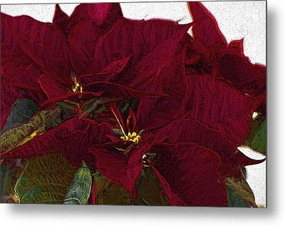 Poinsettia 3 Digital Painting On Canvas 2 Metal Print by Sharon Talson