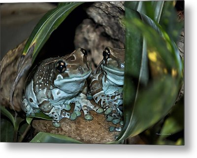 Poisonous Frogs With Sticky Feet Metal Print by Thomas Woolworth