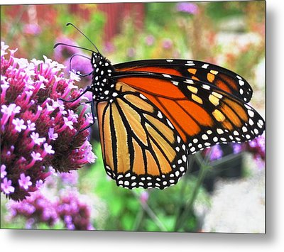 Pollination Nation 3 Metal Print by Will Boutin Photos