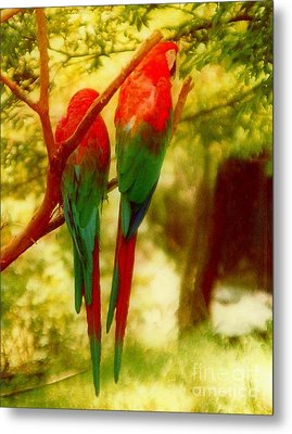 Polly Wants Two Crackers At New Orleans Louisiana Zoological Gardens  Metal Print by Michael Hoard