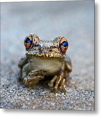 Pondering Frog Metal Print by Laura Fasulo